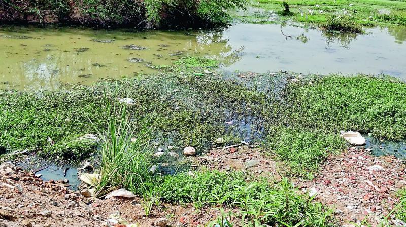 The polluted Meedhikunta lake.