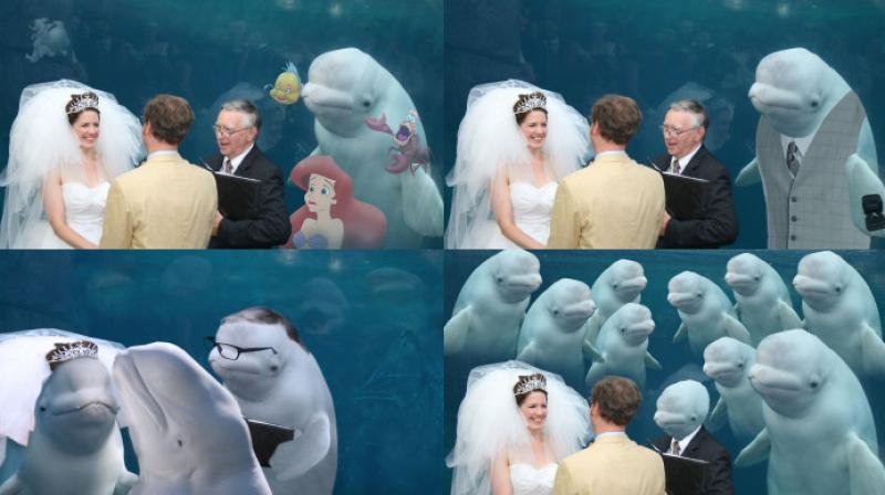A picture of a couple getting married in the Mystic aquarium in Connecticut while a whale watches went viral and photoshop professionals made hilarious situations out of it. (Photo: Reddit)