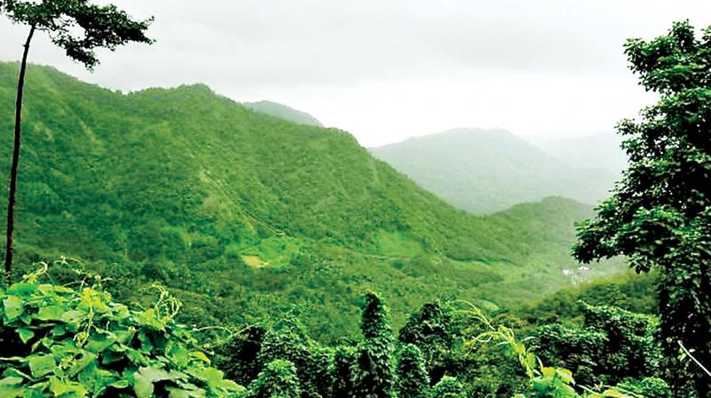 These forests bring a lot of rain from the Arabian sea and distribute this precipitation over a large area of forest and surrounding lands.