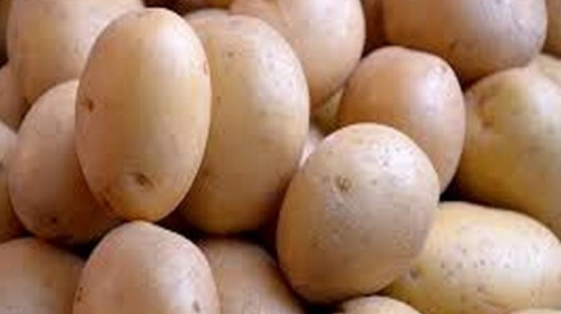 Plasma glucose concentrations went up by a similar amount in those consuming potatoes and gels. (Photo: ANI)