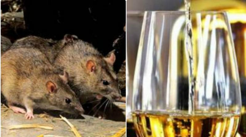 The US officials stated that the buildings used for manufacturing, processing, packing or holding of drug products are not free from infestation by rodents, birds, insects and other vermin. (Photo: File)