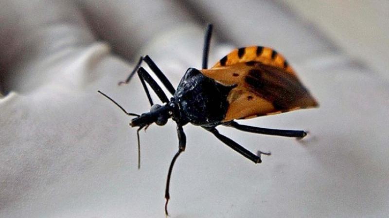 bugs full movie in hindi