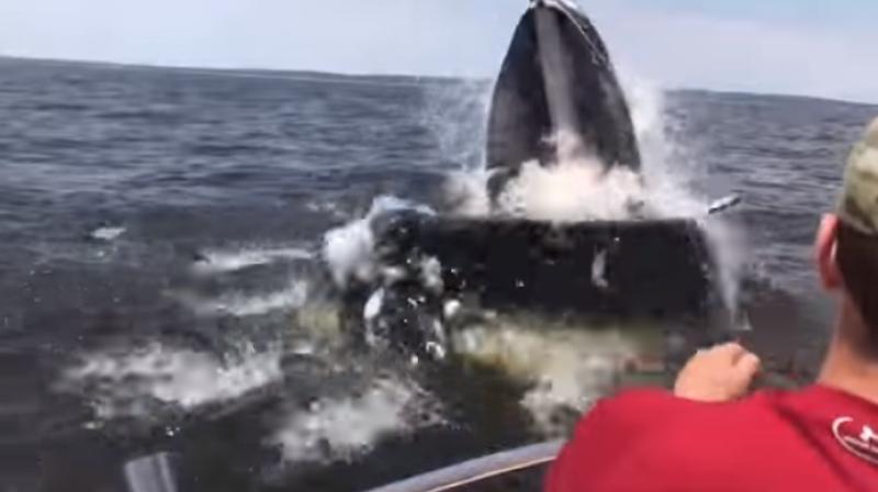 Whale breaches near boat off the shore of NJ coast (Photo: Youtube)