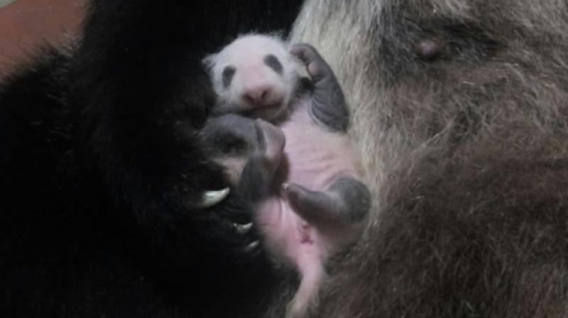 The birth of a panda at a Tokyo zoo last month, the first in five years, sparked panda fever in the capital. (Photo: AFP)