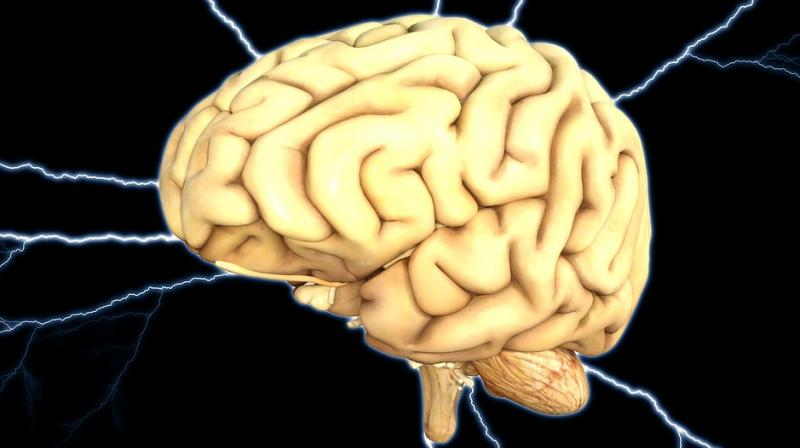 Brain is made up of two broad cell types, nerve cells or neurons and glia (Photo: Pixabay)
