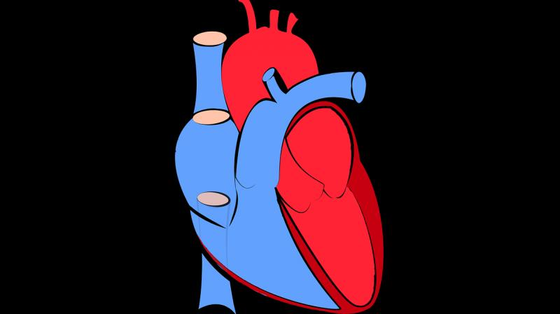 Scientists discover protein that tricks heart into turning healthy