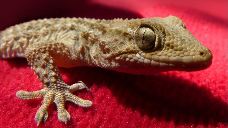 According to the lawsuit, the geckos had not been decomposed at all and were likely alive when the beer was poured and sealed (Photo: Pixabay)