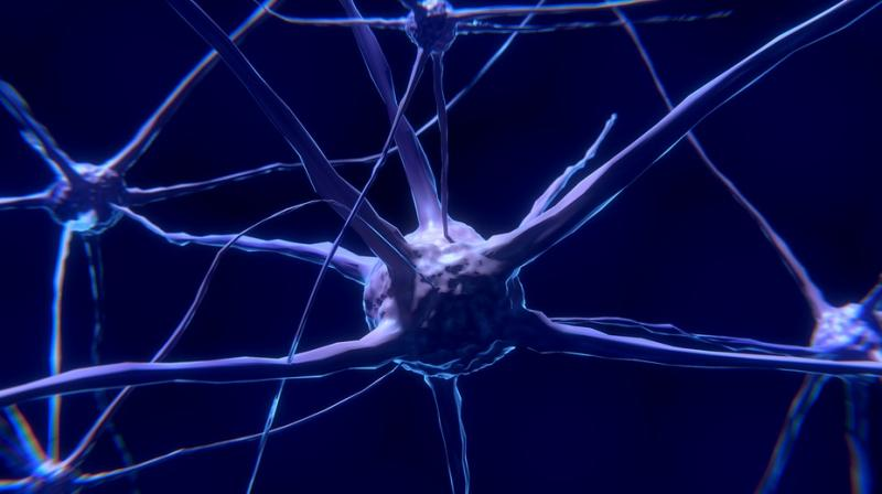 Understanding the role of alpha-synuclein in physiological or pathological processes may aid in the development of new treatments for Parkinson's disease.  (Photo: Pixabay)