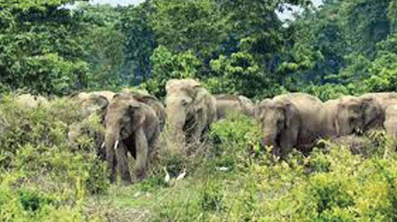 According to the farmers, the tusker has descended from the Kannavam forest in Kannur district.