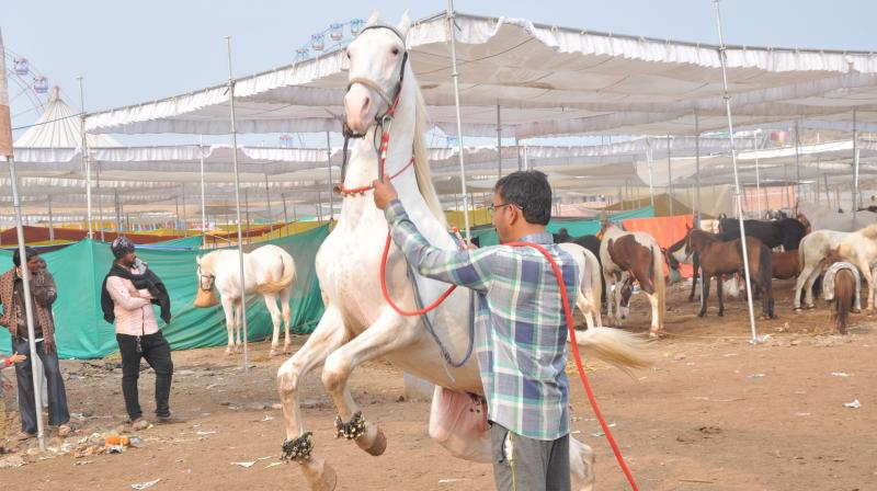 PETA's intervention application included health assessment reports by a team of two government veterinarians from the Maharashtra Animal Husbandry Department who examined the horses and found that they suffered from malnourishment. (Representational Image)