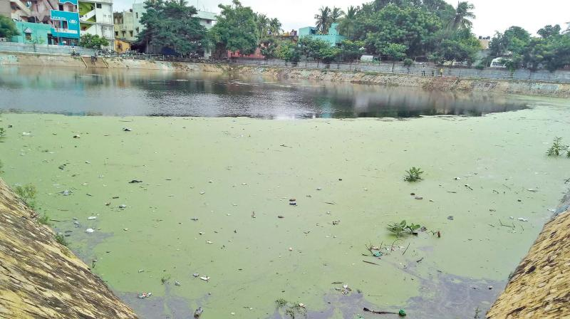 Shivan temple tank at TNHB Colony in Korattur remains unclean. (Photo: DC)