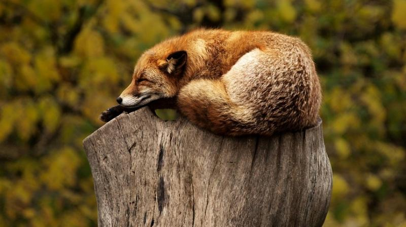 Pollution can alter wildlife behaviour. (Photo: Pixabay)