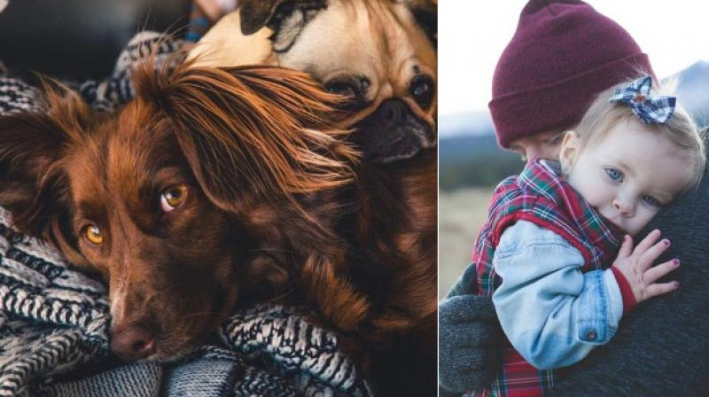 Dogs have toddlers' level of emotional awareness, study claims (Photo: Pexels)