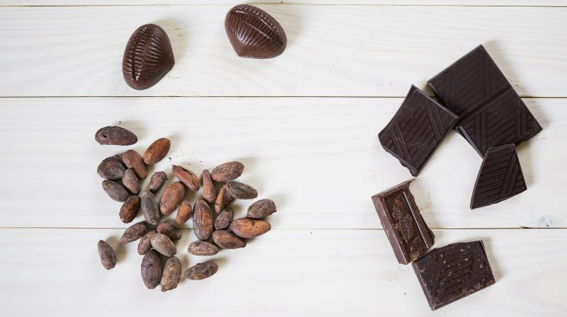 The cocoa industry is threatening to the environment, including by contributing to deforestation. (Photo: Pixabay)