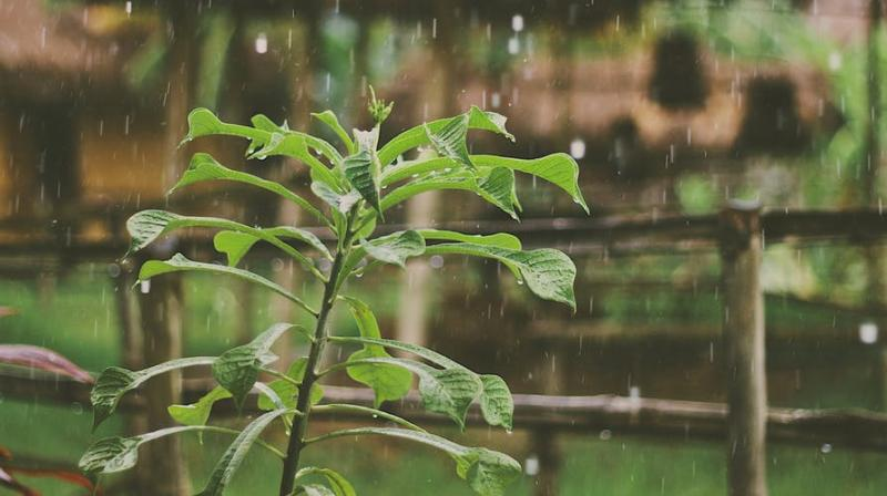 Along with the cooling weather, rains have always brought loads of illnesses. (Photo: Pexels)