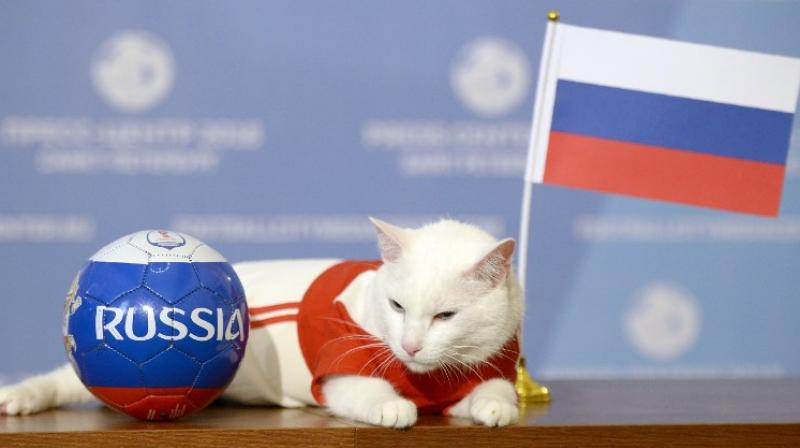 Achille the cat, one of the State Hermitage Museum mice hunters, poses for a photo with Russia national flag during a ceremony in Saint Petersburg. (Photo: AFP)