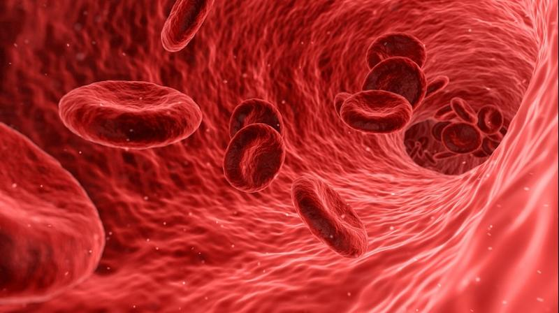 Scientists can examine blood vessels located in the carotid system in order to investigate the cerebral blood flow response (Photo: Pixabay)