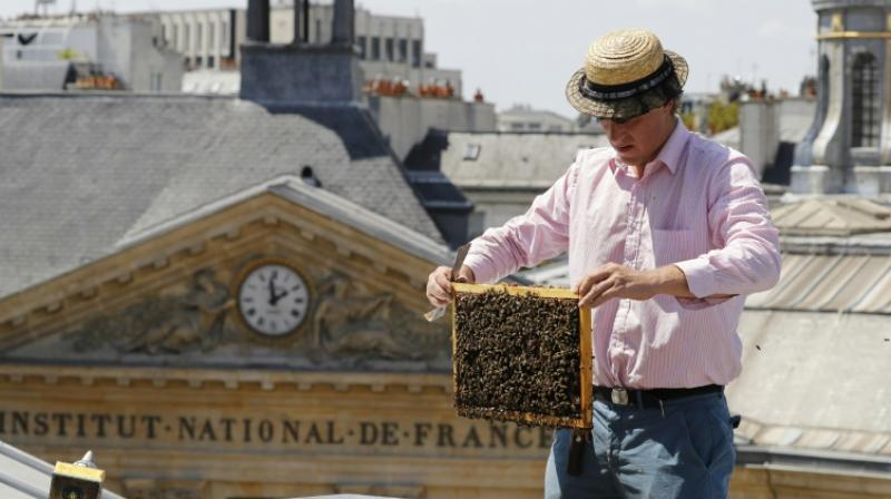 Audric de Campeau is a French urban beekeeper, and his beehives sit atop monuments and office buildings and on rooftop terraces in the French capital. (Photo: AFP)