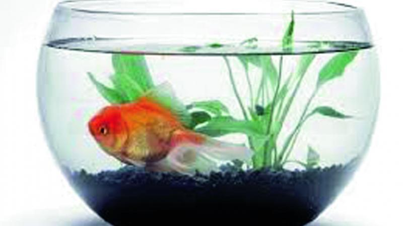 When purchasing a fish, take some time to research exactly what you are buying.