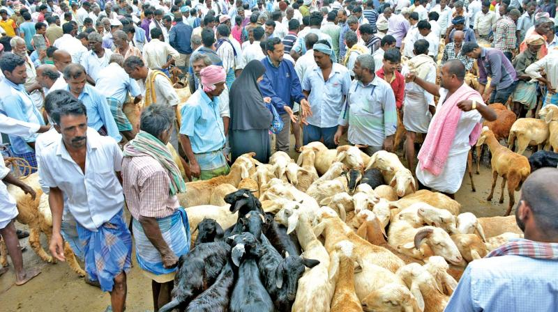 Tamil Nadu: Goat, sheep prices double after Jamaat 'advisory'