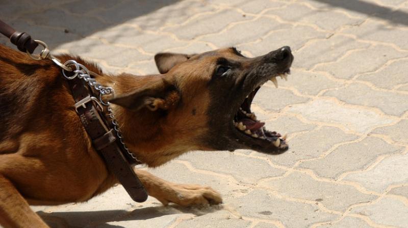 Pri poskusu reševanja ženske je moški odtrgal testis od psa-4754