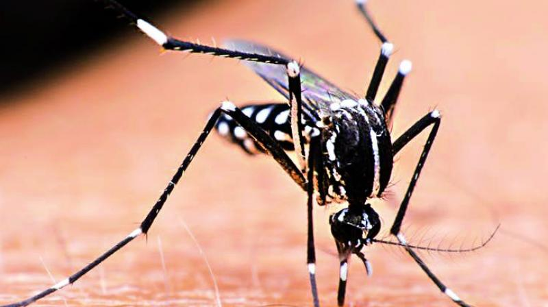 Climate change is also said to impact the life cycle of the mosquito; variations in temperatures and humidity cause mosquitoes to breed in large numbers.