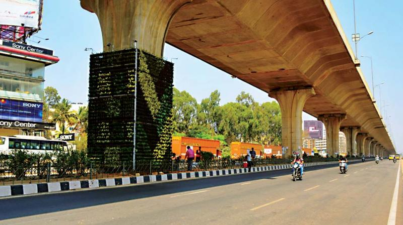 Saplings planted below the flyover at Electronics City in Bengaluru .(Photo: DC)