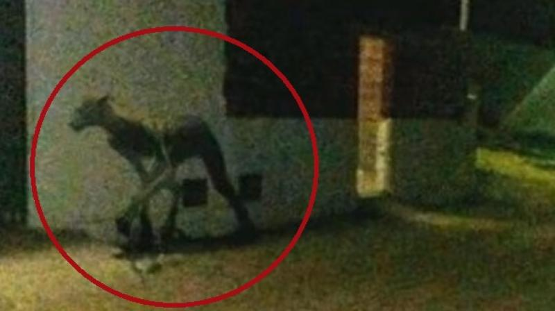 One user claimed that it's a vampire like creature identified as Chupacabra which is a part of Latin folklore (Photo: YouTube)