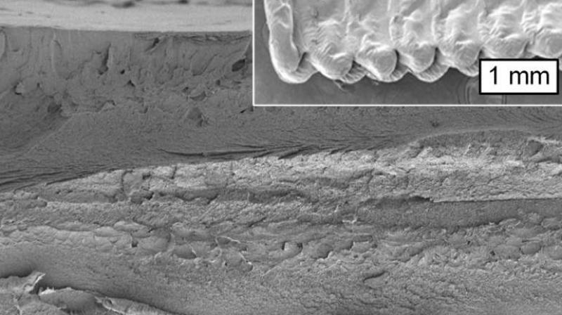 Image from a scanning electron microscope shows a cross section of an object printed using cellulose. (Photo: MIT)