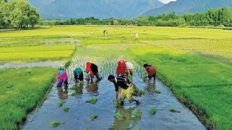 In the last year and a half, batches of farmers have arrived in the nation's capital as many as four times to draw the attention of Parliament and the government to the crisis in agriculture and to the miserable lives they lead.