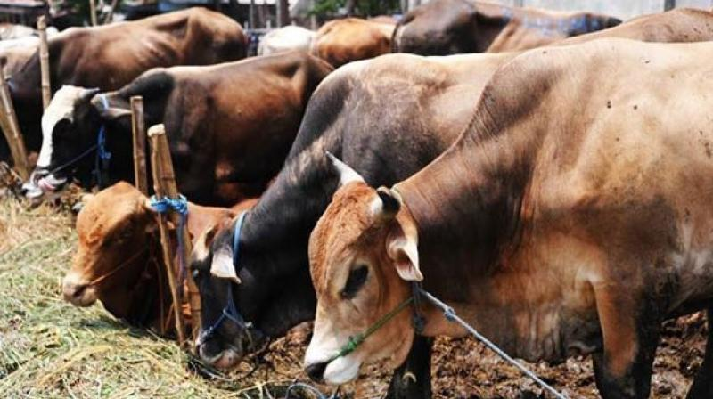 The accused men smuggled cattle illegally for slaughter to parts of western Uttar Pradesh. (Representational image)