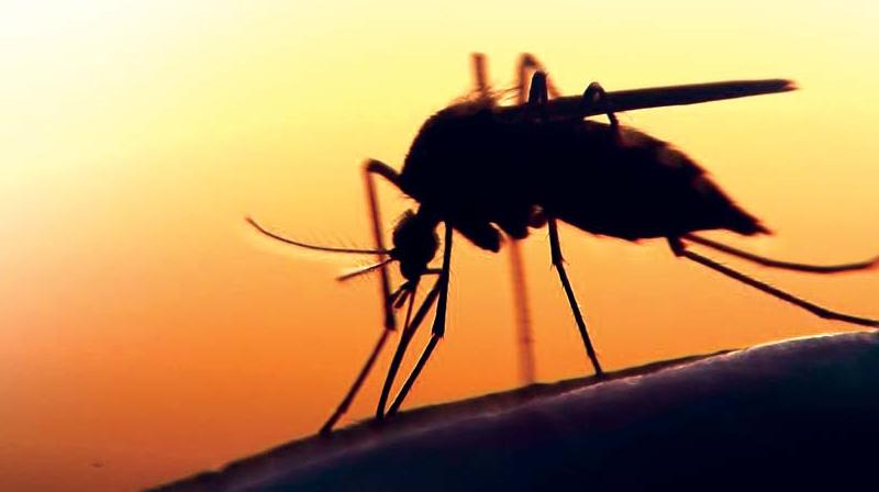 As per reports from the National Vector Borne Disease Control Programme, in 2018 there were 433 cases of malaria in BBMP  limits