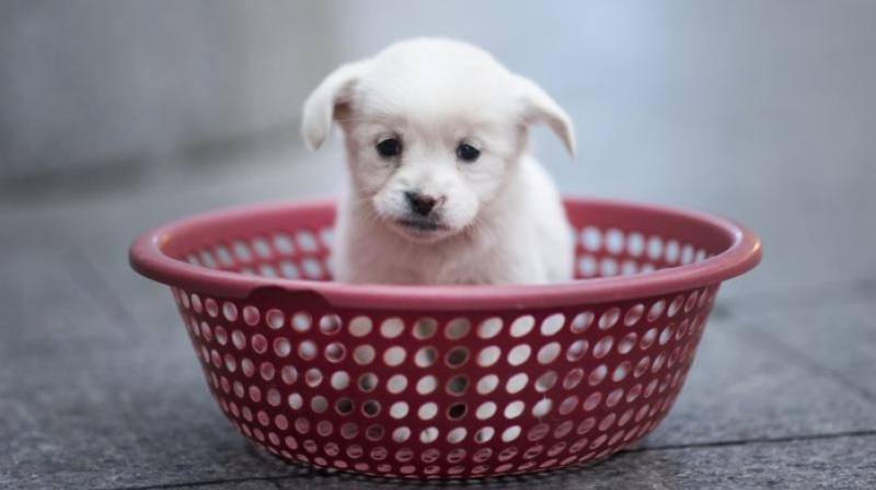 United Kingdom mulls pet shop puppy sale ban