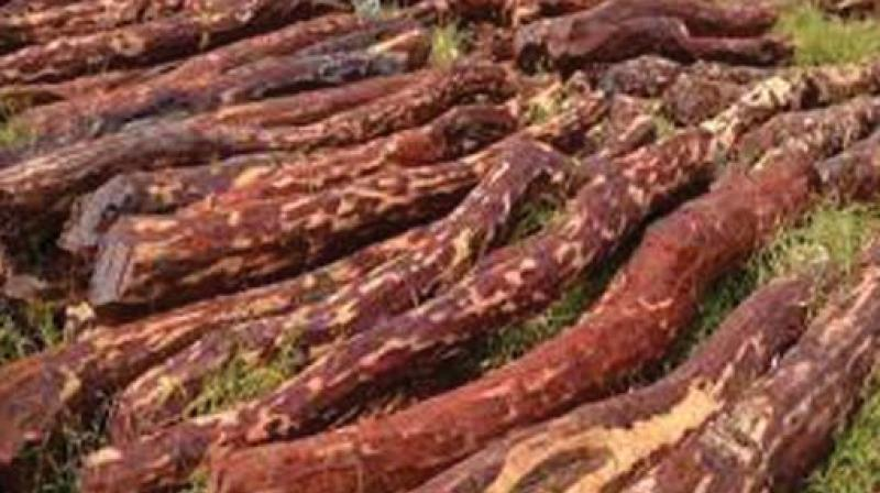 The Hyderabad police arrested the realtor and his three aides including a junior artiste on Thursday and seized 2.5 tonnes of red sanders worth Rs 1 crore, and a car. (Representational image)