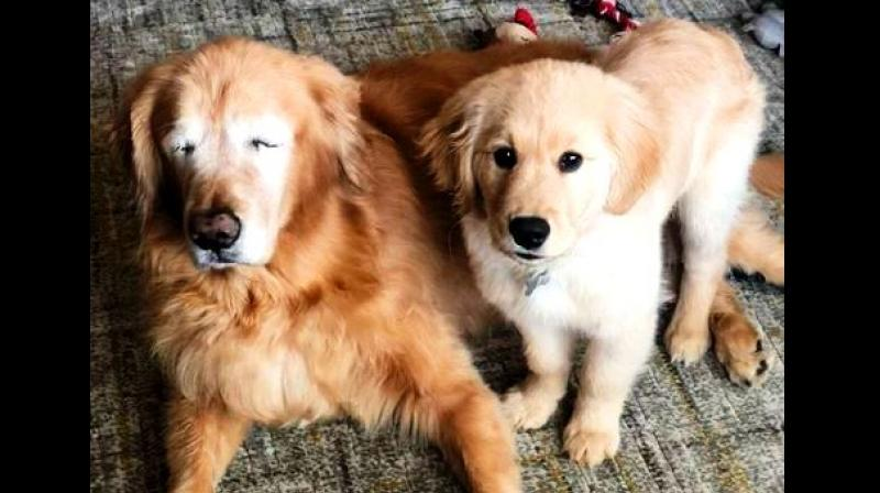 Charlie with his new pal Maverick, a 4-month-old puppy, who helps him navigate the world. (Photo: ANI)