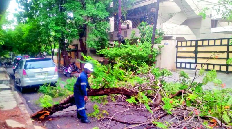 The Disaster Response Force personnel of the GHMC clearing a fallen tree at DD Colony on Saturday. (Photo: P. Surendra)