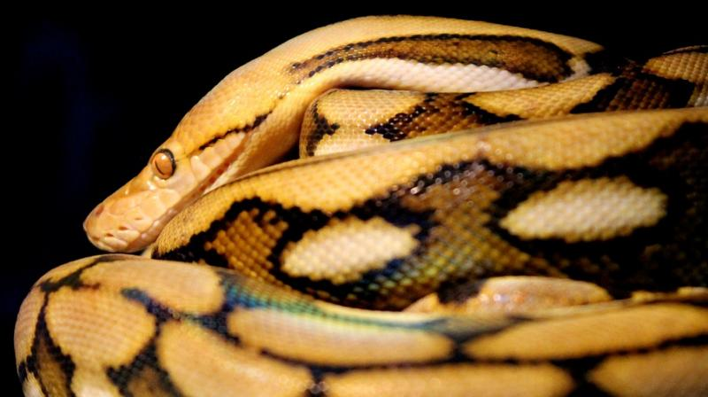 Woman tries to smuggle python inside hard drive in luggage onto flight. (Photo: Pixabay)