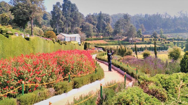 Captivating The Karnataka Siri Horticulture Garden(KSHG) At Fern Hill Area In Ooty. (