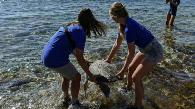Volunteers help turtles on the beaches of Kyparissia Bay in Greece. (Photo: AFP)