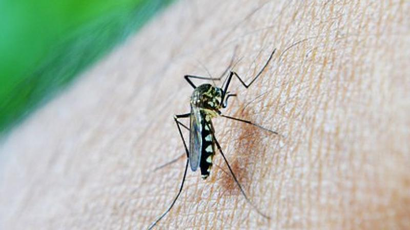 India ranks 14th in terms of the number of malaria cases in the world. (Photo: Representational/Pixabay)