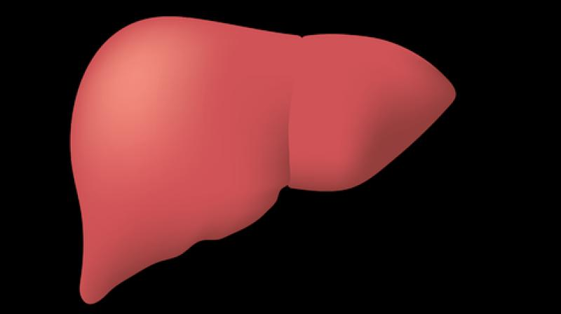 Increasing liver storage time is a breakthrough in the medical world. (Photo: Representational/Pixabay)