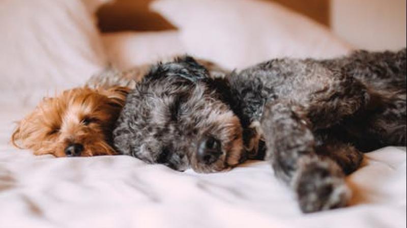 A good night's sleep is a dog away. (Photo: Representational/Pexels)