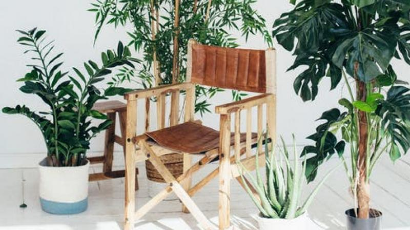 Gavin was inspired by a bonsai tree that looked like a chair. (Photo: Representational/Pexels)