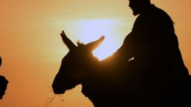 He had sex with one of two donkeys he lured away from the herd (Photo: AFP)