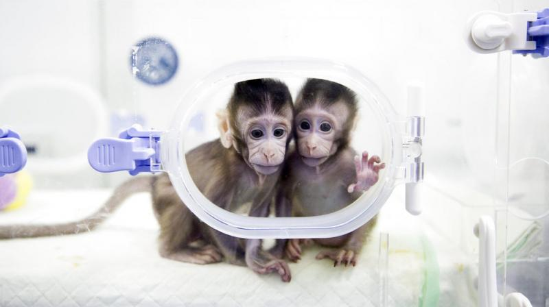 The breakthrough means that it would theoretically be easier to clone a human. (Photo: AP)