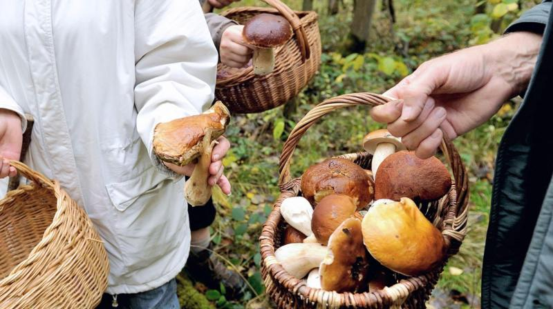 Previous studies on mushrooms suggest that they can be more satiating than meat (Photo: AFP)