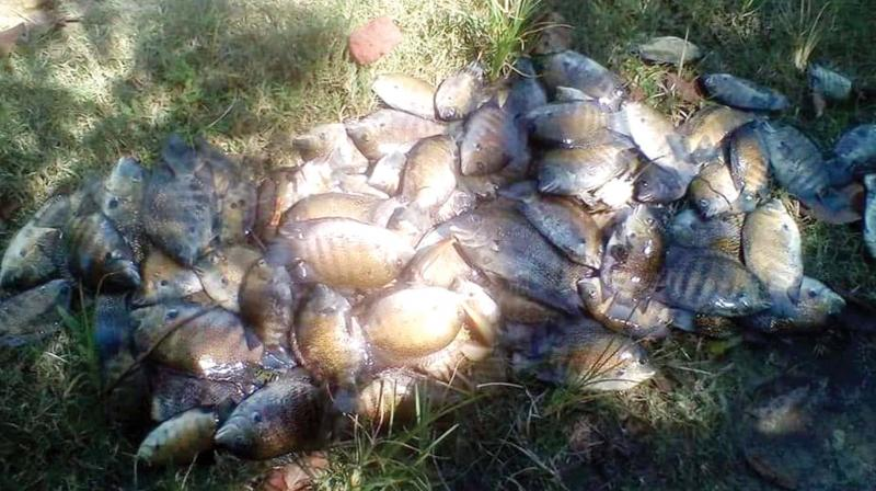 The health department has sent the samples to the food safety department to determine whether the dead fish was edible as the residents used nets to collect the fish floated in the water body.