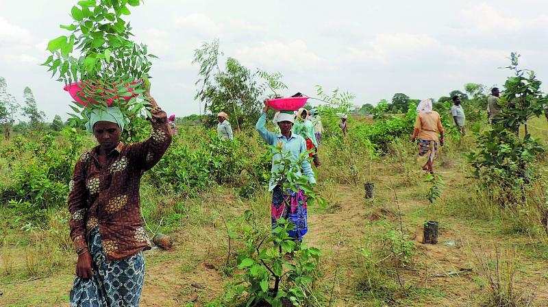 Forest labouers planting saplings in the forest land at Sarasala.