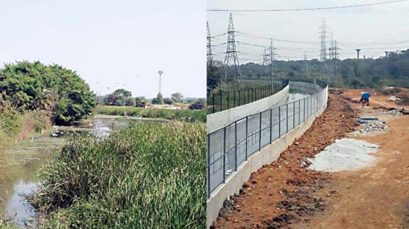 The reed bed before and after construction of the culvert for gas plant