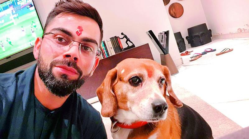 Cricketer Virat Kohli enjoys spending time with Bruno. He says that he loves being lazy at home with his dog.